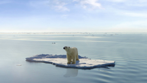 "(Recognize this image? Did you know it's not real? You can find this photo on Istockphoto.com with the following note in the photo caption: ""This images [sic] is a photoshop design. Polarbear, ice floe, ocean and sky are real, they were just not together in the way they are now."")"