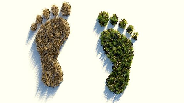 footprints made of grass, one brown grass one green